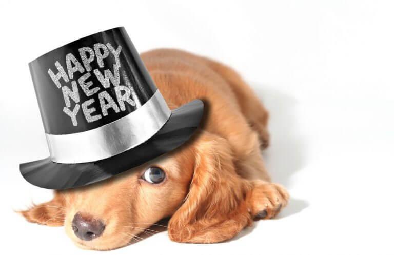 новый год 2018 земляной собаки